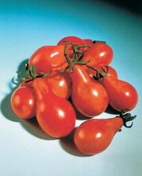 pomodoro Red little pear